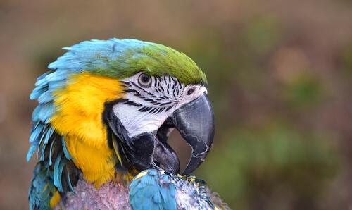 Las plumas detectan enfermedades