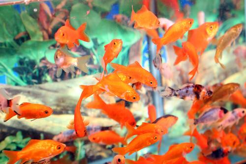 Principales problemas de un acuario