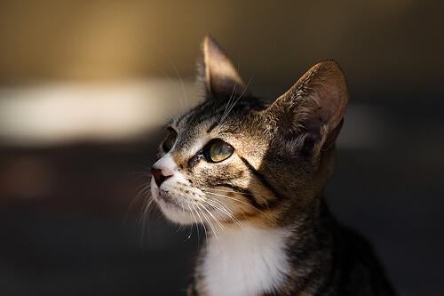 ¿Qué gato elegir?