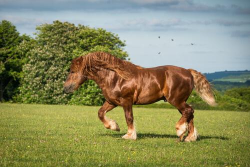 10 razas de caballo de tiro