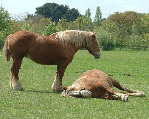 mueren las molestias del caballo