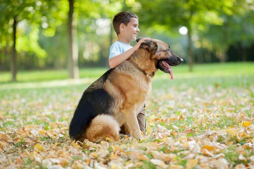 ¿Cuáles son las razas de perro más cariñosas?