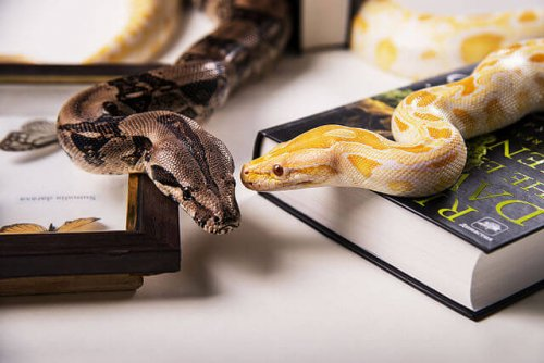 Tipos de serpientes domésticas