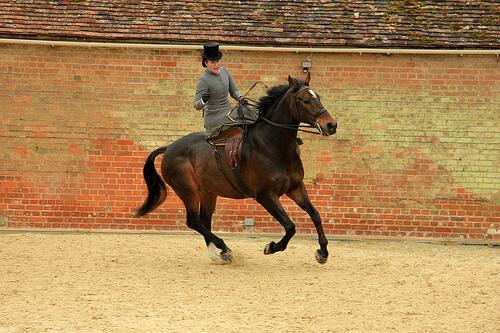 Adiestra a tu caballo para una exhibición