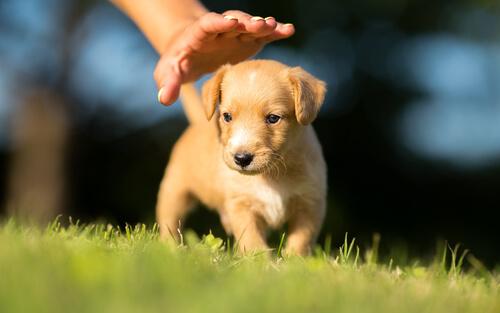 Persona acariciando a un cachorro