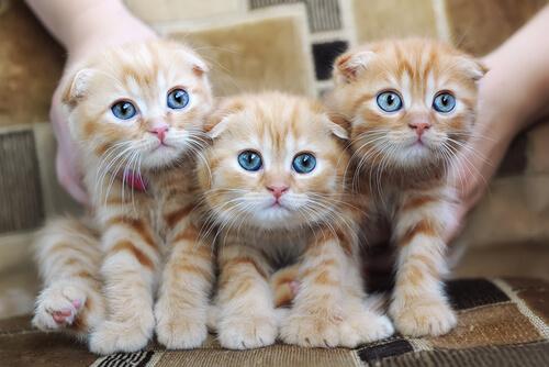 Alergia a los gatos: causas, síntomas y prevención