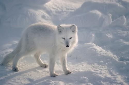 Animales adaptados al frío extremo