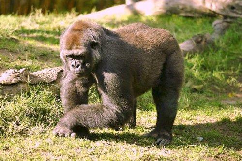 Animales más fuertes del mundo