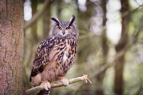9 animales que viven en el bosque mis animales for Medio en el que habitan los arboles