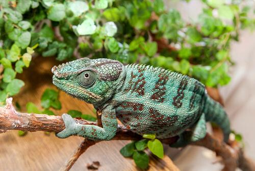 Animales que se camuflan: técnicas maestras