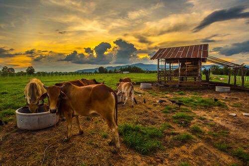 Animales que viven en el campo