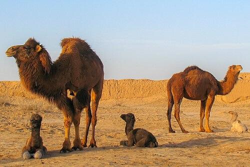 Animales que viven en el desierto