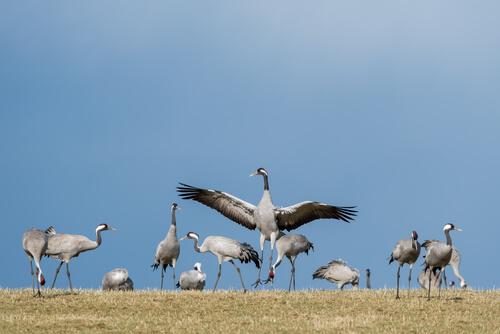 6 aves migratorias que debes conocer