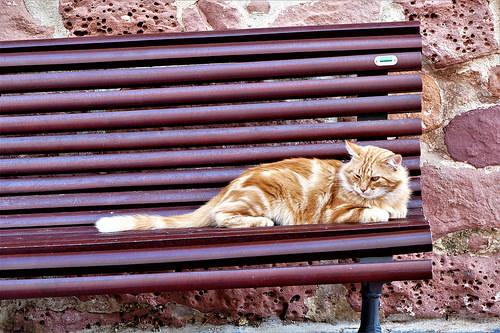 ¿Cómo puedo ayudar a los gatos callejeros?