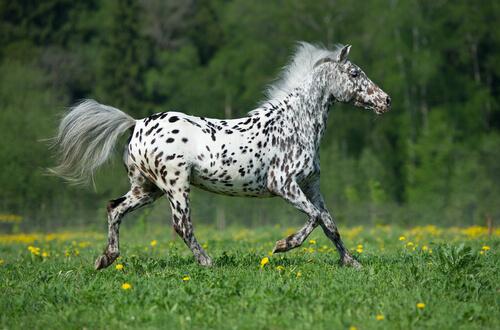 5 razas de caballos de carreras — Mis animales