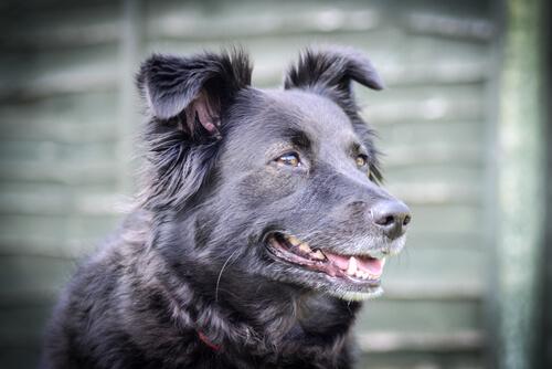 ¿Cómo calmar a un perro enfadado?