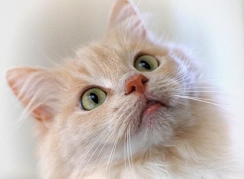 Adiestramiento de gatos con clicker