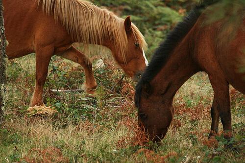 Complementos básicos para caballos