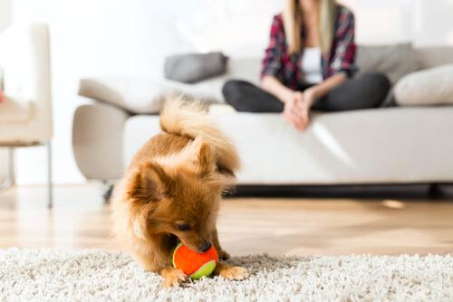 Aspectos básicos de la conducta canina