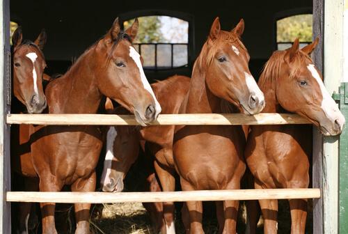 Cría de caballos