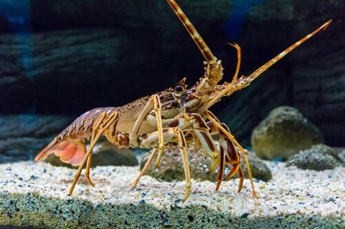 8 diferencias entre crustáceos y moluscos
