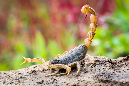 Diferencias entre vertebrados e invertebrados: escorpion