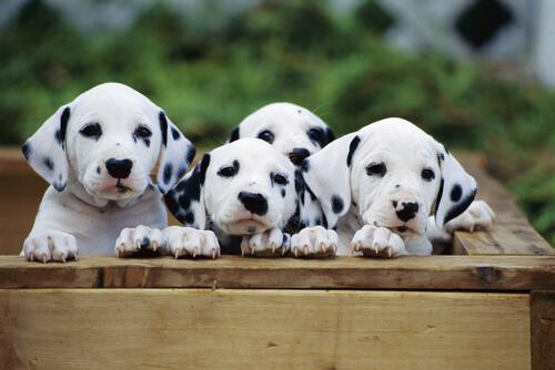 La eclampsia en perros y gatos