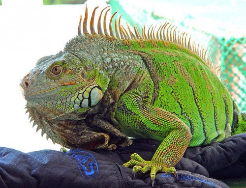 La enfermedad ósea metabólica en reptiles