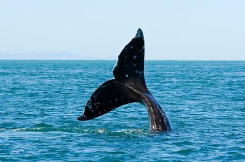 5 especies de ballenas