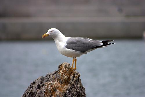 8 especies de aves marinas