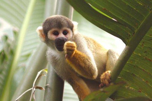 8 Especies De Monos Mis Animales