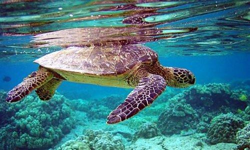 Especies de tortugas.