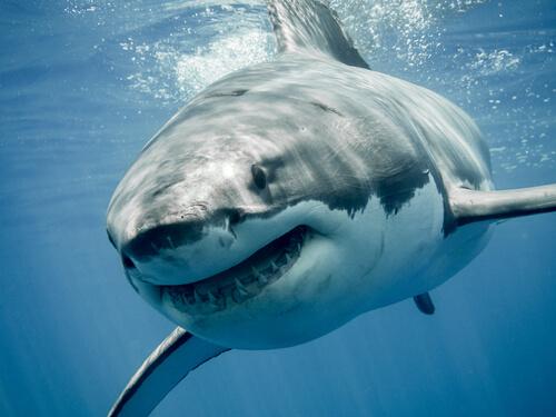 Especies de tiburones: ejemplos