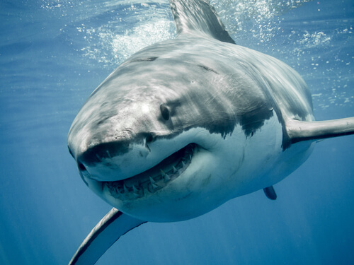 7 especies de tiburones