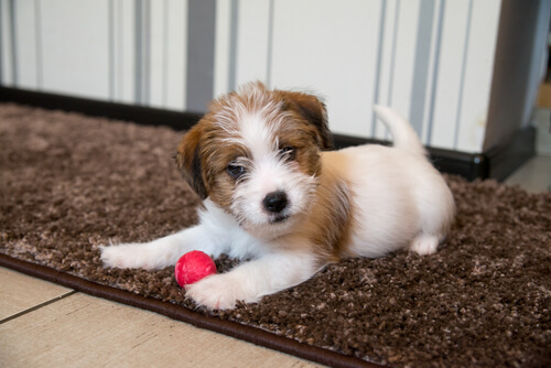 La importancia de la estimulación temprana en cachorros