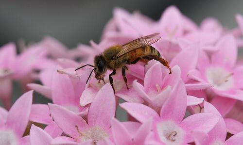 La importancia de las abejas en el ecosistema