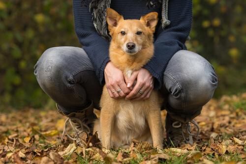 La insuficiencia cardíaca en perros