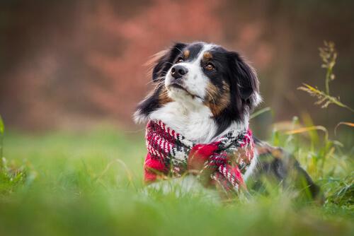 Invierno y perros: cuidados y consideraciones