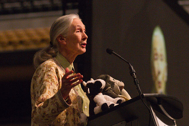 ¿Quién es Jane Goodall?
