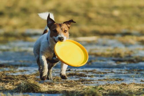 ¿Cómo jugar con tu perro al frisbie?
