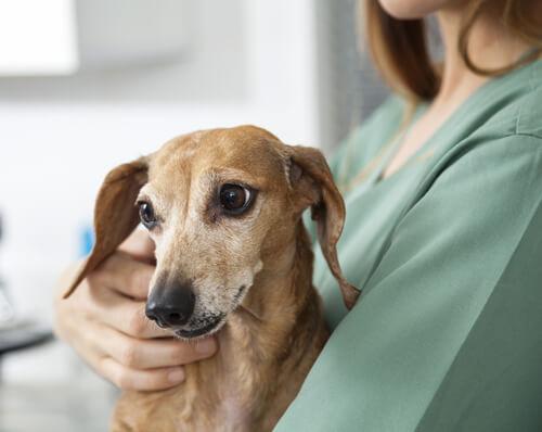 La centellografía en medicina veterinaria