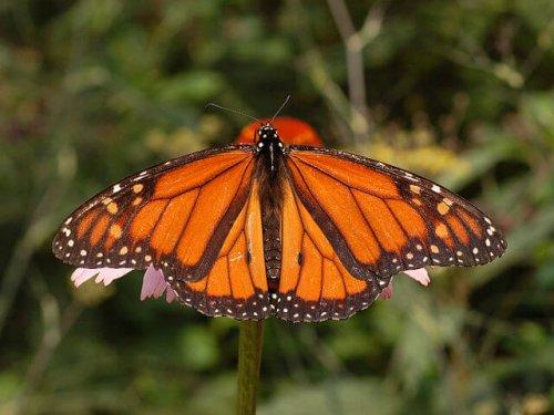 Las mariposas más impresionantes
