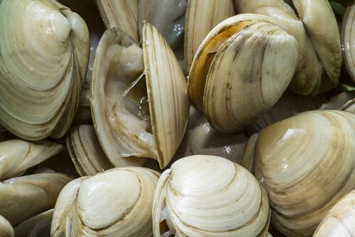 Moluscos: almejas