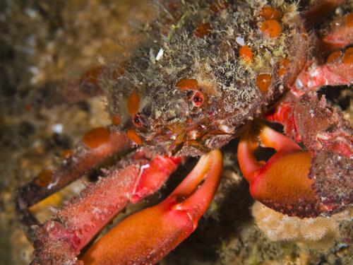 Moluscos y crustáceos: diferenci