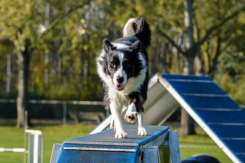 8 normas no escritas de los parques para perros