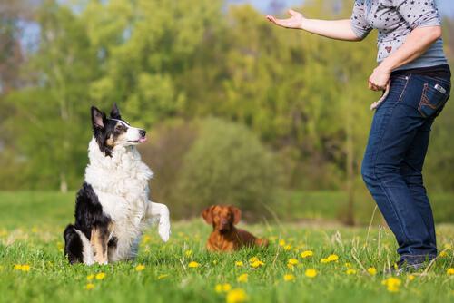 Ejercicios de obediencia básica en perros