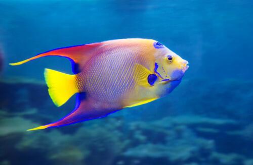 como curar parásitos en peces