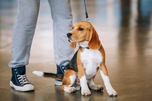 ¿Los perros sienten empatía?