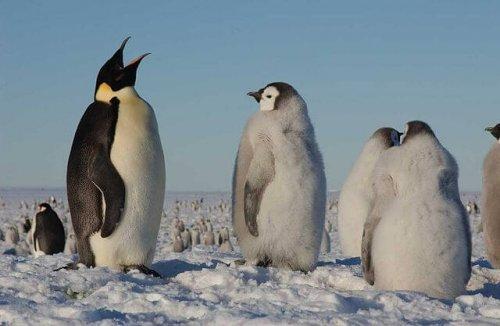 Pinguinos en la nieve
