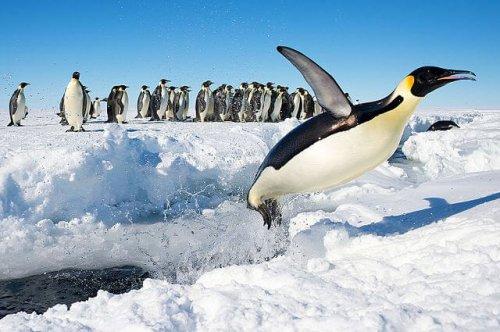 5 lugares para avistar pingüinos